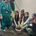 Tree Plantation Program (3)