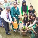 Tree Plantation Program (9)